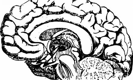 brain 450x270 - curious