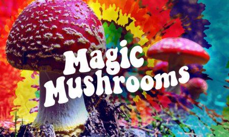 magic mushrooms lead image3 450x270 - curious
