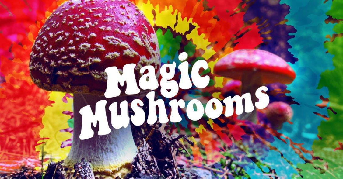magic mushrooms lead image3 - curious