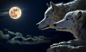 wolf 547203 1920 300x180 - spirituality