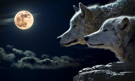 wolf 547203 1920 450x270 - spirituality