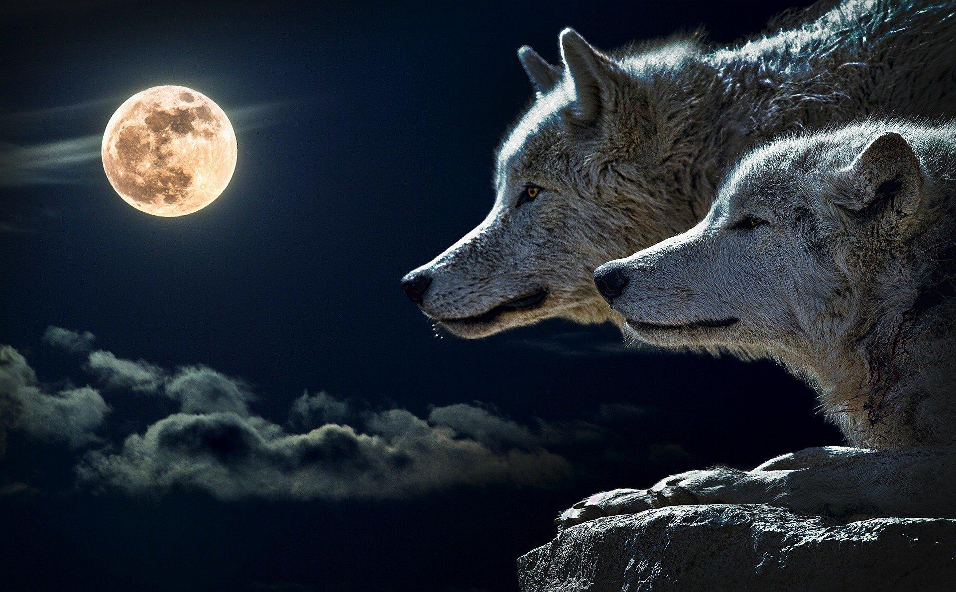 wolf 547203 1920 - spirituality