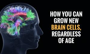 brain cells 300x180 - curious
