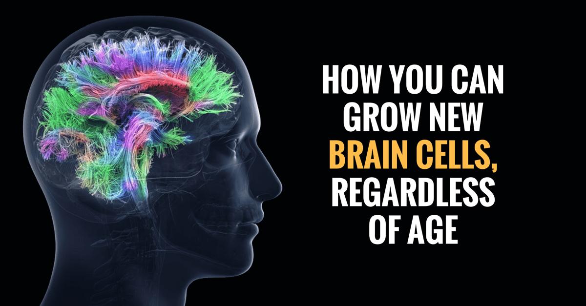 brain cells - curious