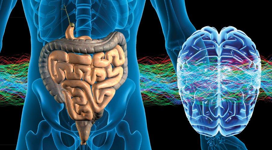 brain gut connection - curious