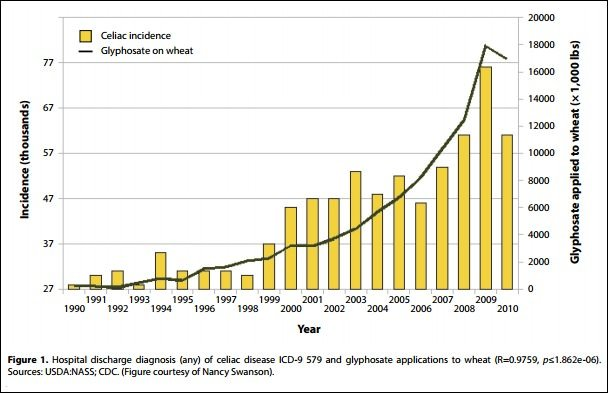 celiac incidence as a factor of glyphosate application to wheat - curious