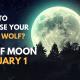 wolf moon 80x80 - zodiac, self-improvement