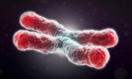 a telomere 006 - science
