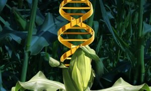 DNA From Genetically Modified Crops Can Be Transferred Into Humans Who Eat Them 300x180 - curious