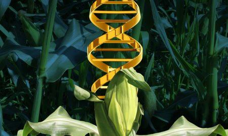 DNA From Genetically Modified Crops Can Be Transferred Into Humans Who Eat Them 450x270 - curious