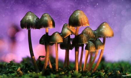 Scientists Have Found The Reason Why Magic Mushrooms Evolved to Be So Magical 450x270 - curious