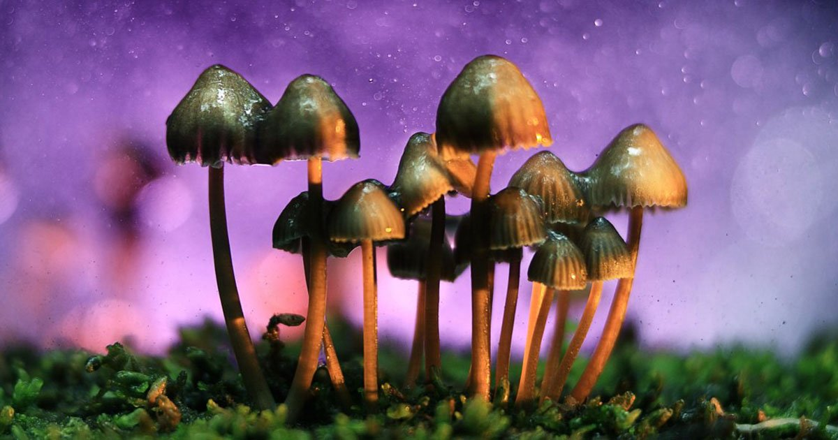 Scientists Have Found The Reason Why Magic Mushrooms Evolved to Be So Magical - curious