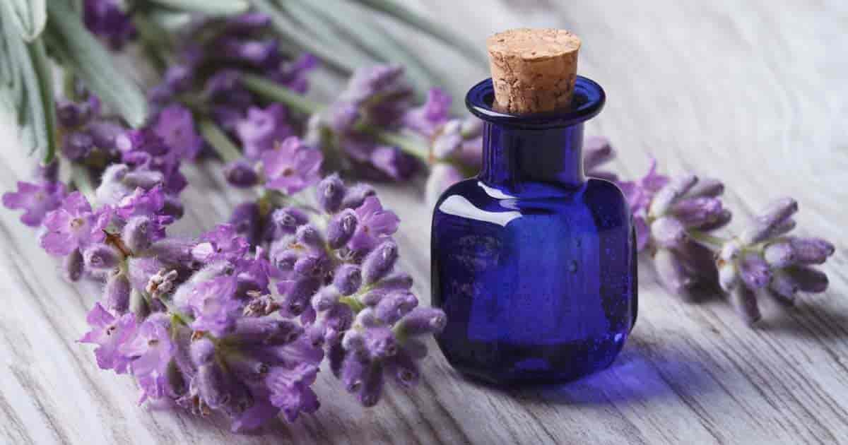 lavender essential oil 09302017 min - health