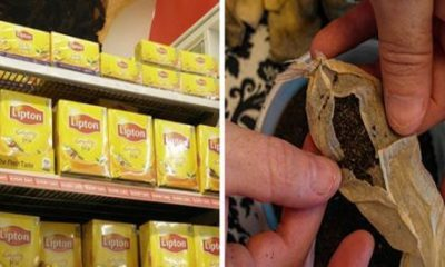 most popular tea bags contain illegal amounts deadly pesticides avoid these brands at all costs 400x240 - health