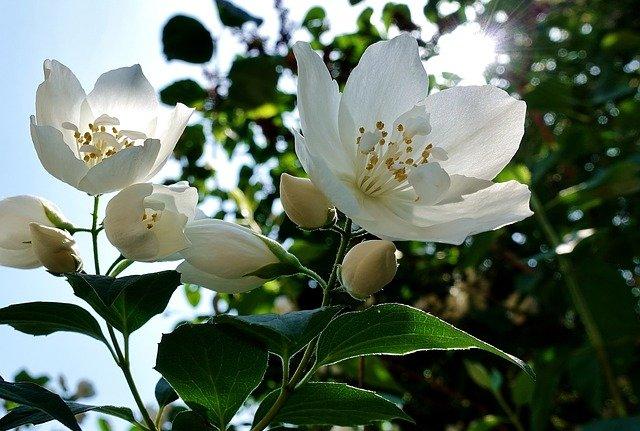 flower 3444238 640 - health